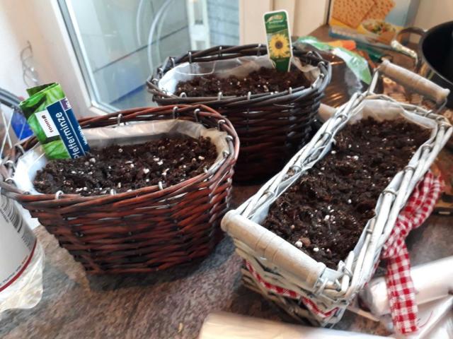 küchenpflanzen.png